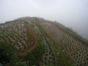 terrace-rice-fields